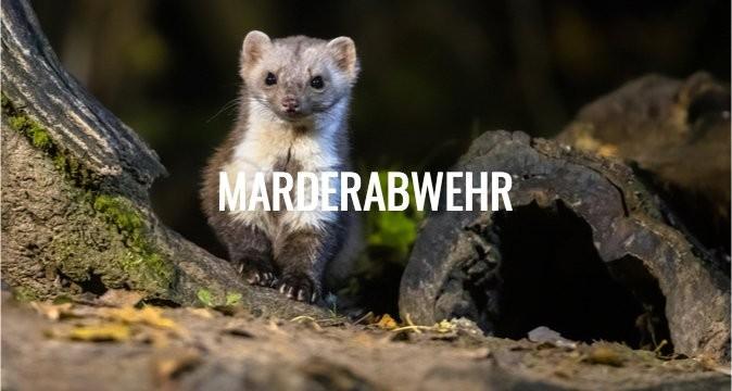 Marderabwehr