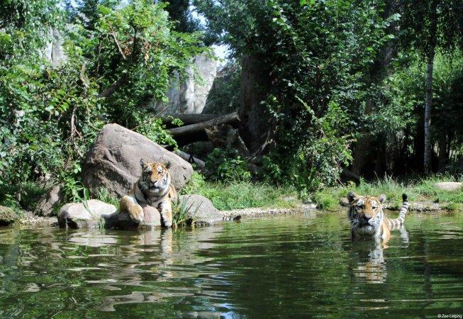 3 Tage im 4* H+ Hotel Leipzig-Halle & zwei Eintrittskarten für den Zoo Leipzig